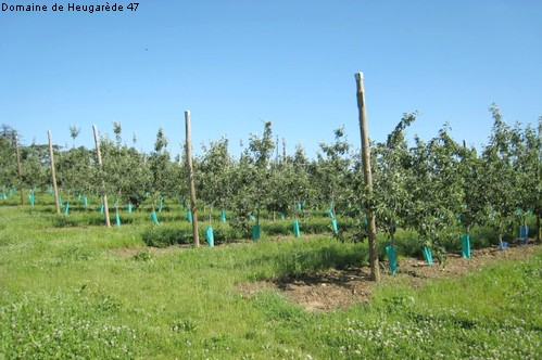 producteur fruit vente directe 47 lot et garonne